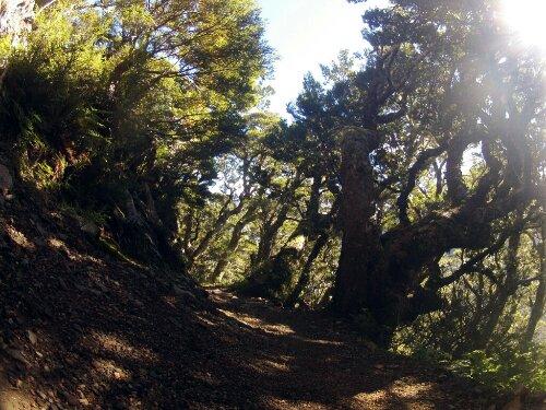 La forêt du Kepler Track